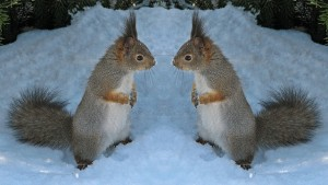 squirrel mirror