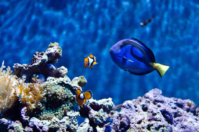 Why Finding Dory Might Leave U Stressed Out (& Two Tips 2 Calm Down)